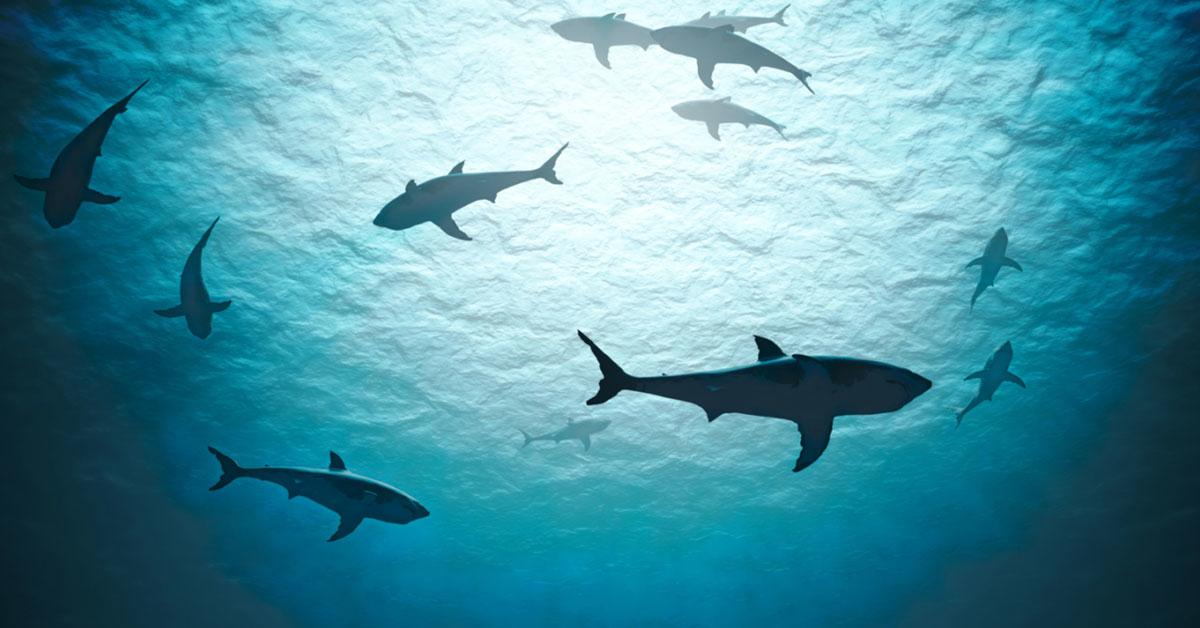 shark week x